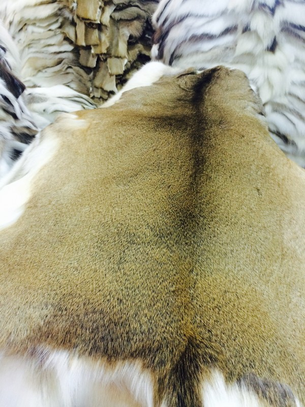 Scandinavian white-tailed deer fur hide